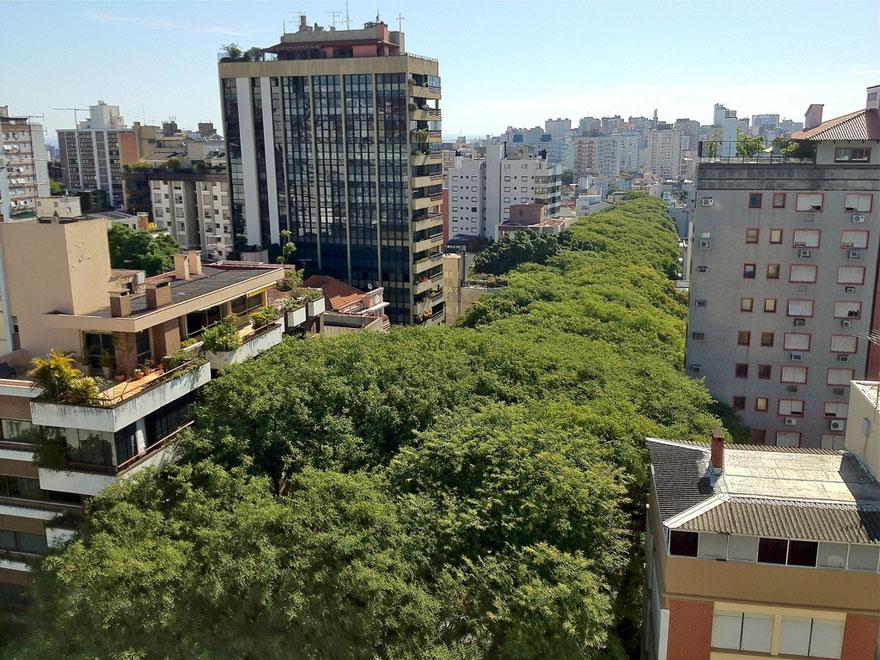 alberi in condominio